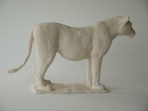 Leeuwin, 16 cm