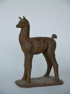 jonge lama